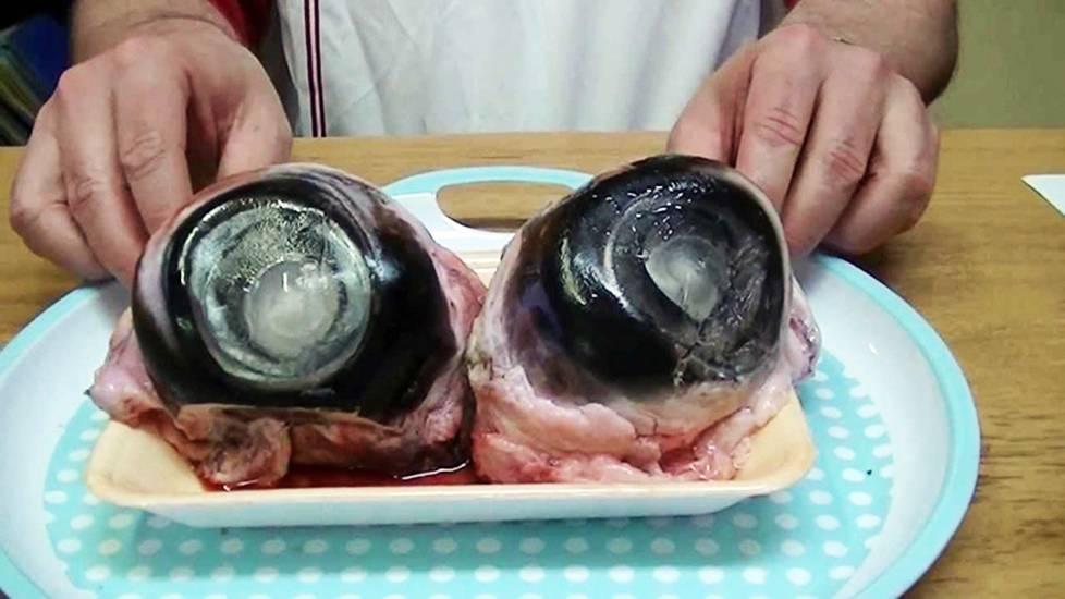 Khi nhãn cầu cá ngừ mở mắt trân trân nhìn người ăn