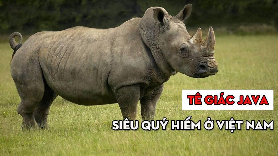Loài tê giác quý hiếm nhất thế giới có mặt tại Việt Nam