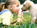 Lễ cầu may mắn cho... thú cưng