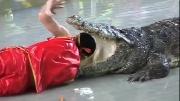 'Cao thủ' đánh liều chui đầu vào miệng cá sấu