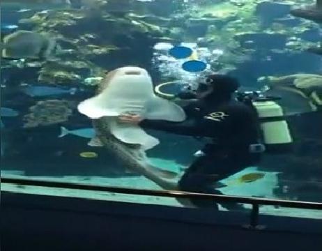 Liều lĩnh mát-xa cho cá mập