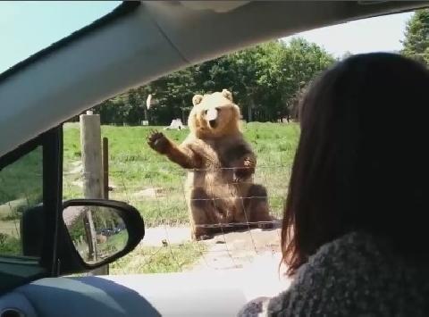 """Chú gấu có """"""""công phu"""""""" tóm đồ ăn siêu đẳng gây sốt!"""