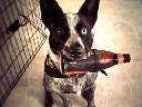 Chó mở tủ lạnh lấy bia cho chủ