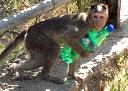 Băng đảng khỉ 'trộm cắp như ranh' ở Ấn Độ