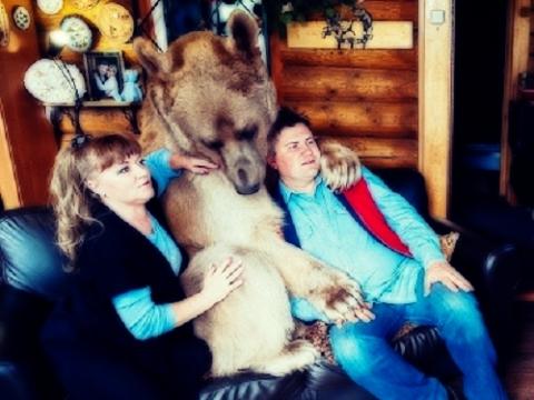 Cặp vợ chồng ăn ngủ cùng gấu cưng nặng 136kg