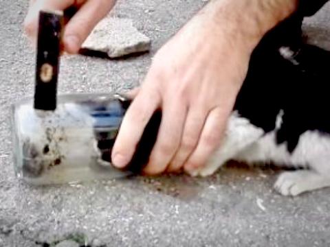 Giải cứu mèo bị mắc kẹt đầu trong lọ thuỷ tinh
