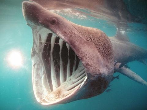 Đi câu... cá mập