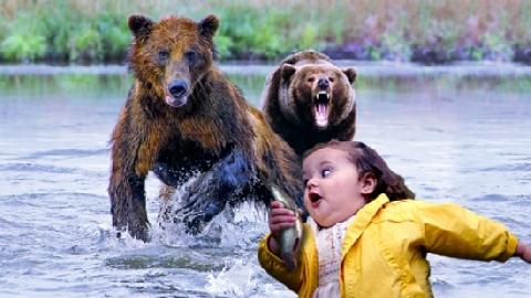 Lũ gấu và những clip ấn tượng nhất!