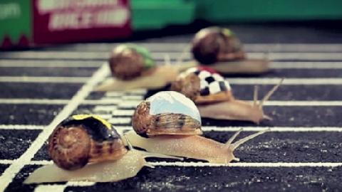 Kỳ lạ cuộc đua ốc sên tại Anh