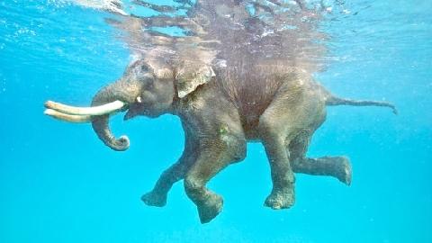12 giờ giải cứu chú voi đuối nước giữa biển