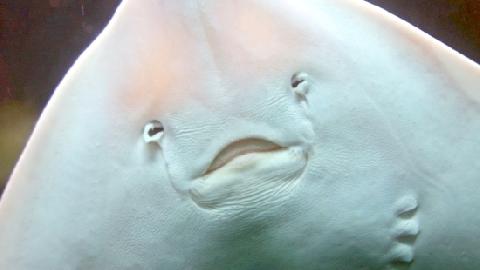 Con cá có 'cái mặt dễ thương' nhất thế giới