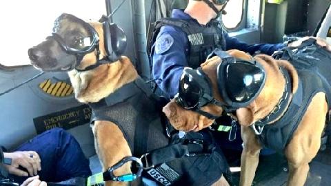 Chó cảnh sát đeo kính, đi giày tuần tra!