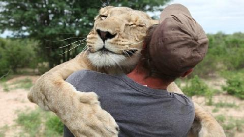 Đứng tim khoảnh khắc sư tử ôm chầm ân nhân!
