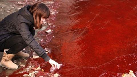 Dòng sông máu đỏ tươi, bốc mùi tanh nồng ở Trung Quốc