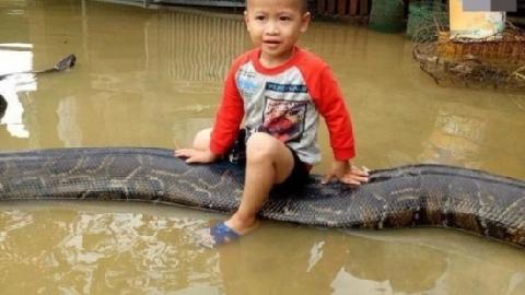 Cậu bé cưỡi trăn tại Thanh Hóa nổi tiếng trên báo nước ngoài