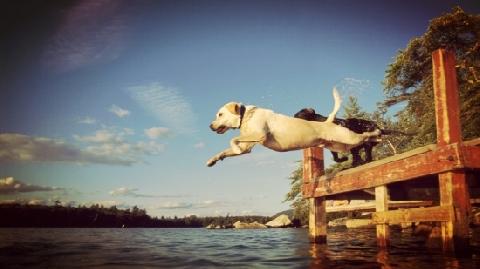 Cây cầu nổi tiếng với những vụ tự sát của... chó