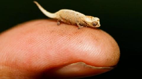 10 Loài Vật nhỏ bé nhưng nguy hiểm nhất thế giới
