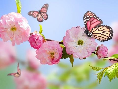 Điệp Khúc Mùa Xuân - Bảo Anh
