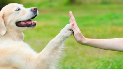 Mỹ: Dùng chó để giáo dục sự cảm thông