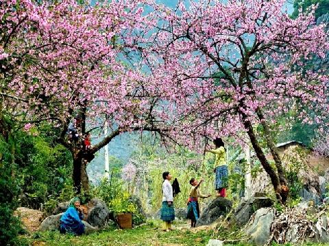Nắng Ấm Mùa Xuân - Nhiều nghệ sĩ