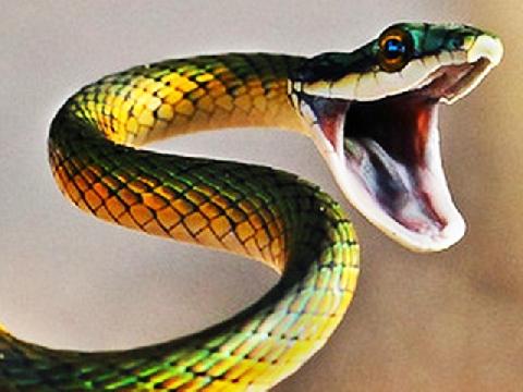 """Vì sao rắn thường bị mang tiếng là """"kẻ xấu xa"""""""