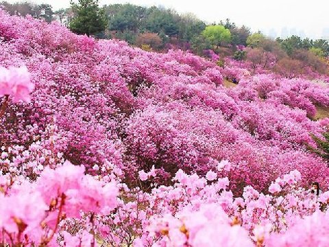 Nghìn loài hoa rực rỡ như chốn bồng lai tiên cảnh