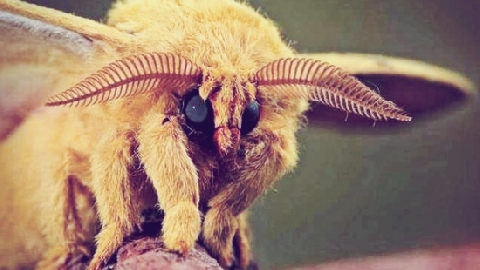 10 Loài Vật Là Con Rơi Của Quỷ Satan