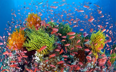 Sự kỳ diệu của rạn san hô Great Barrier