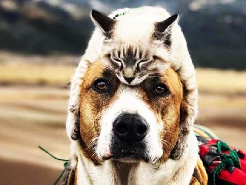 Cặp đôi chó - mèo đưa nhau đi khắp thế gian