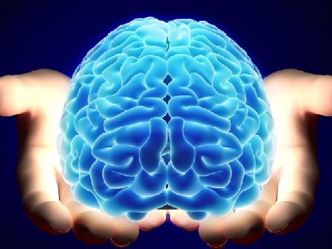Não càng lớn thì càng thông minh?