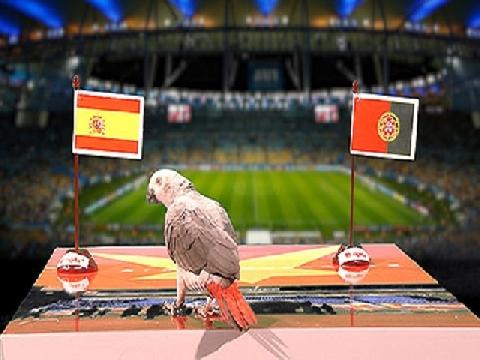 Vẹt Natasha dự đoán trận Tây Ban Nha - Bồ Đào Nha