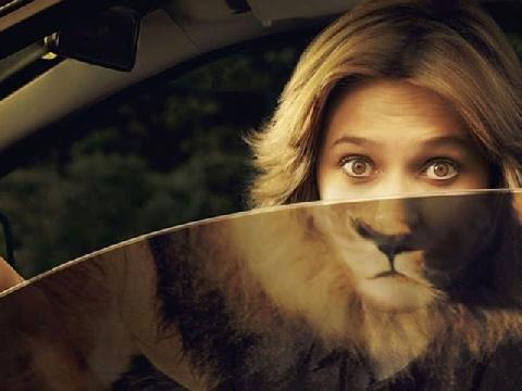 Nhà có vợ là sư tử Hà Đông