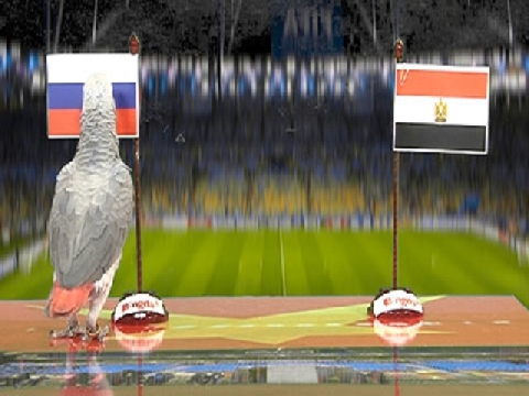 Vẹt Natasha dự đoán kết quả trận Nga - Ai Cập