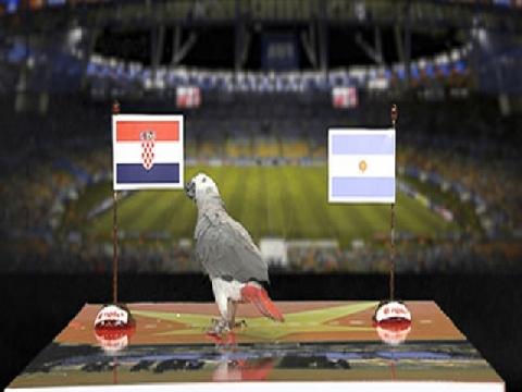 Vẹt Natasha dự đoán kết quả trận Argentina - Croatia