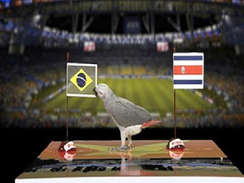 Vẹt Natasha dự đoán trận Brazil - Costa Rica