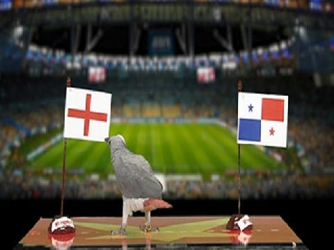 Vẹt Natasha dự đoán trận Anh - Panama