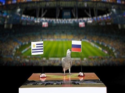 Vẹt Natasha dự đoán trận Uruguay - Nga
