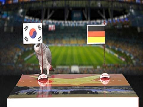 Vẹt Natasha dự đoán trận Hàn Quốc - Đức