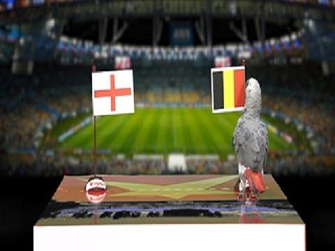 Vẹt Natasha dự đoán kết quả trận Anh - Bỉ