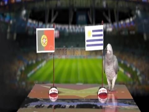 Vẹt Natasha dự đoán trận Bồ Đào Nha - Uruguay