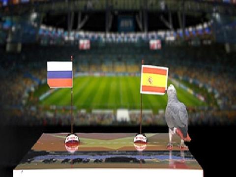 Vẹt Natasha dự đoán trận Tây Ban Nha vs Nga
