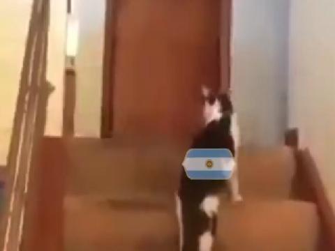 Hài: Khi hàng thủ Argentina gặp Mbappe