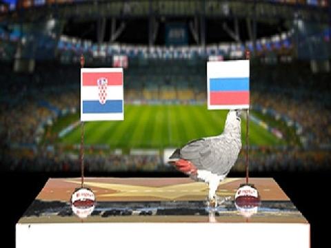 Vẹt Natasha dự đoán trận Nga - Croatia