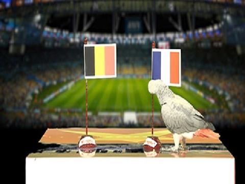 Vẹt Natasha dự đoán trận Pháp - Bỉ