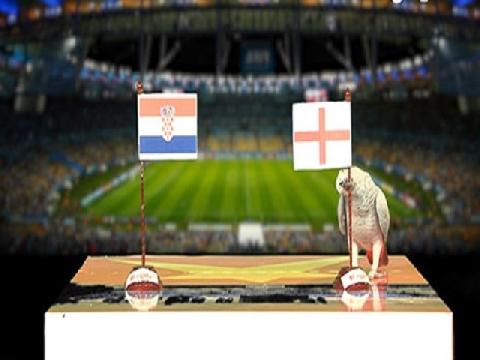 Vẹt Natasha dự đoán trận Croatia - Anh