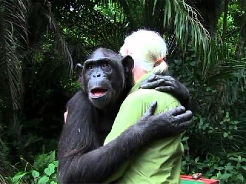 Tinh tinh ôm chầm lấy ân nhân cứu mạng - khoảnh khắc lay động hàng triệu trái tim
