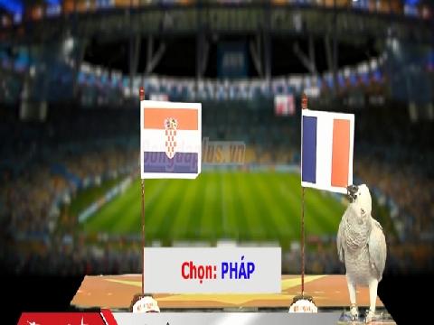 Vẹt Natasha dự đoán trận chung kết Pháp - Croatia