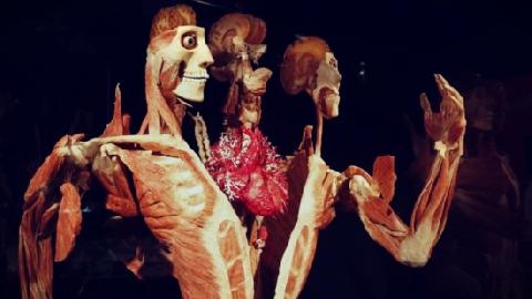 Bí ẩn 'Nhựa hóa cơ thể người'!