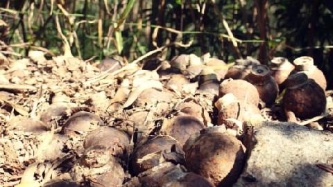 Quảng Ngãi: phát hiện 97 quả đạn trong sân trụ sở tỉnh