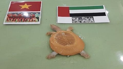 Dự đoán O.Việt Nam – O.UAE: Rùa vàng Hà Nội chọn đội nào?